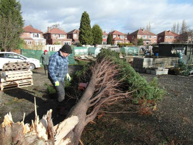 Allotments news for you...Dial Park not only flooded but we have trees down...2 large conifers one on the car park & one through a neighbours fence.Stockport Direct informed & week later still to appear.Photos can be provided.If you want to send a roving reporter down we will be happy to accomodate & will put on clean pair of underpants.You are welcome to visit or view just let me know when convenient. Feb 2014