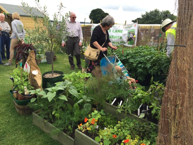 Billy's Lane Allotments Display at Tatton RHS Flower Show 2015
