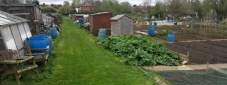 Spring on St Lesmo Allotments 12-04-2014 11.49.58 - Version 2