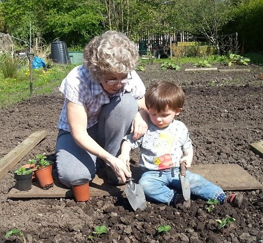 Linda and Eden strawberry planting