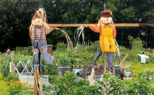 allotment-open-day