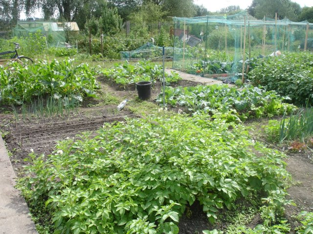Craig Road Allotments