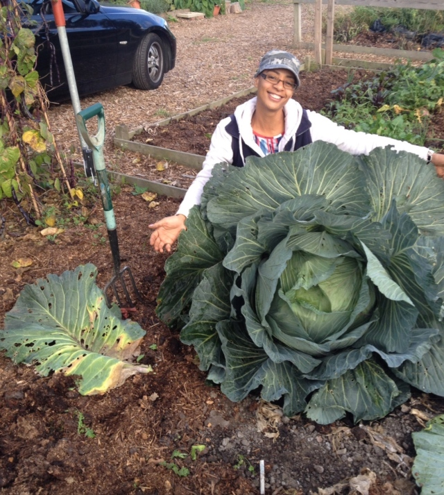 Click image for cabbage growing tips