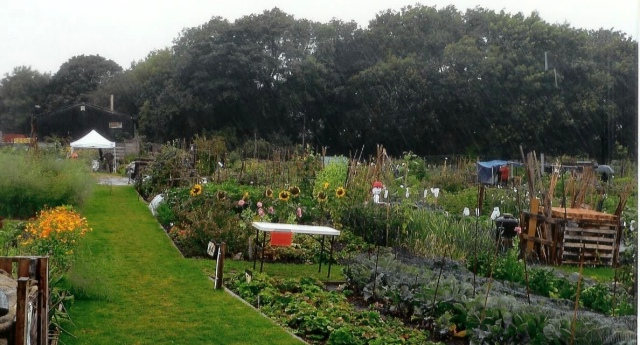 Rosehill Allotments