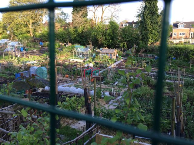 Seven Stiles Allotments